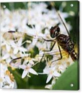 Bugs Acrylic Print