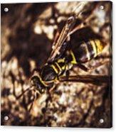 Bugs Life Acrylic Print