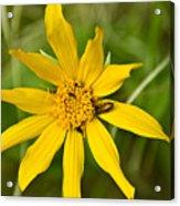 Bugs Paradise Acrylic Print