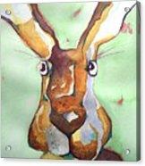 Bugsy Malone Acrylic Print