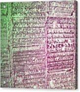 Building Hieroglyphics Acrylic Print