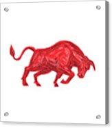 Bull Charging Drawing Acrylic Print