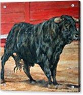 Bull Acrylic Print by David McEwen
