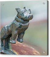 Bull Dog Hood Ornament Acrylic Print