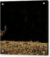 Bull Elk-signed-#0266 Acrylic Print