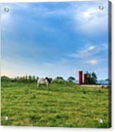 Bull In An East Texas Field Acrylic Print