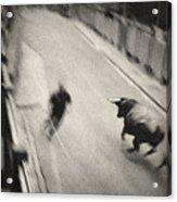 Bull Run 2 Acrylic Print