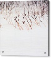 Bull Rushes In The Snow Db Acrylic Print
