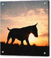 Bull Terrier At Sunset Acrylic Print