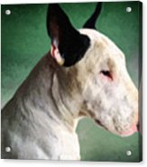 Bull Terrier On Green Acrylic Print