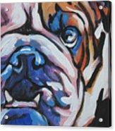 Bulldog Baby Acrylic Print