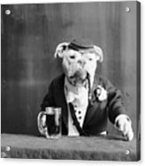 Bulldog, C1905 Acrylic Print