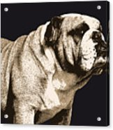 Bulldog Spirit Acrylic Print