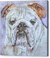 Bulldog - Watercolor Portrait.5 Acrylic Print