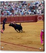 Bullfighting 35 Acrylic Print