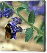 Bumble Bee Delight Acrylic Print