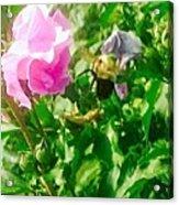 Bumble Bee In Mid Flight Acrylic Print