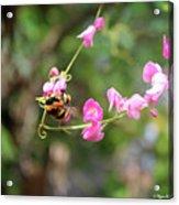 Bumble Bee1 Acrylic Print