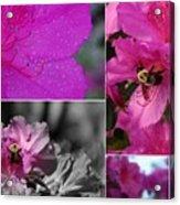 Bumblebee Bonanza Acrylic Print
