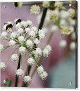 Bumblebee Gang Acrylic Print