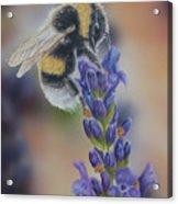 Bumblebee Nr3 Acrylic Print