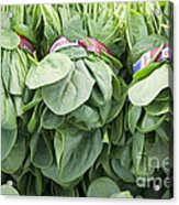 Bundled Spinach After Harvest Acrylic Print