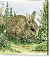 Bunnies Acrylic Print