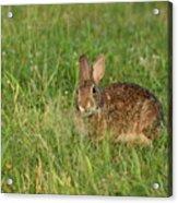 Bunny At Breakfast Acrylic Print
