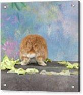 Bunny Butts Are Beautiful  Acrylic Print