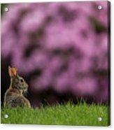 Bunny In The Yard Acrylic Print