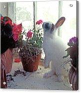 Bunny In Window Acrylic Print