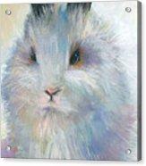 Bunny Rabbit Painting Acrylic Print by Svetlana Novikova