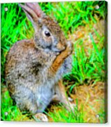 Bunny Secrets Acrylic Print