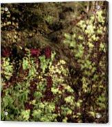 Burgandy Liliacs II Acrylic Print