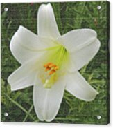 Burlap Textured Easter Lily Acrylic Print