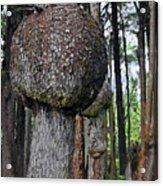 Burly Phantoms - Spruce Burls Beach One Olympic National Park Wa Acrylic Print