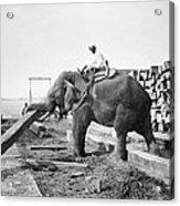 Burma: Elephant Acrylic Print