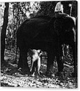 Burma: Elephants, 1960 Acrylic Print