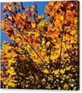 Burning Colours Acrylic Print