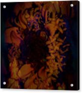 Burning Flower Acrylic Print