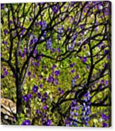 Burnt Bush Acrylic Print
