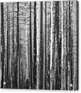 Burnt Forest Acrylic Print