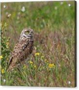 Burrowing Owl And Flowers Acrylic Print