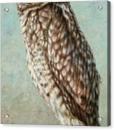 Burrowing Owl Acrylic Print by James W Johnson