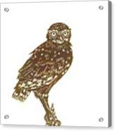 Burrowing Owl On Mullein Acrylic Print