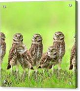 Burrowing Owl Acrylic Print by Thy Bun