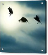 Burst Of Crows Acrylic Print