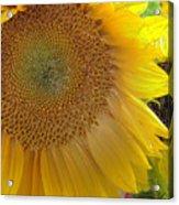 Burst Of Sunshine Acrylic Print