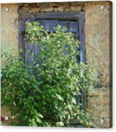 Bush And Window Acrylic Print