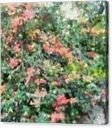 Bush Full Of Flowers. Acrylic Print